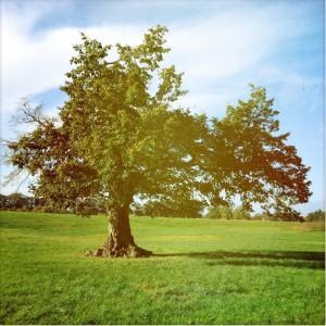 Dreamtree 2